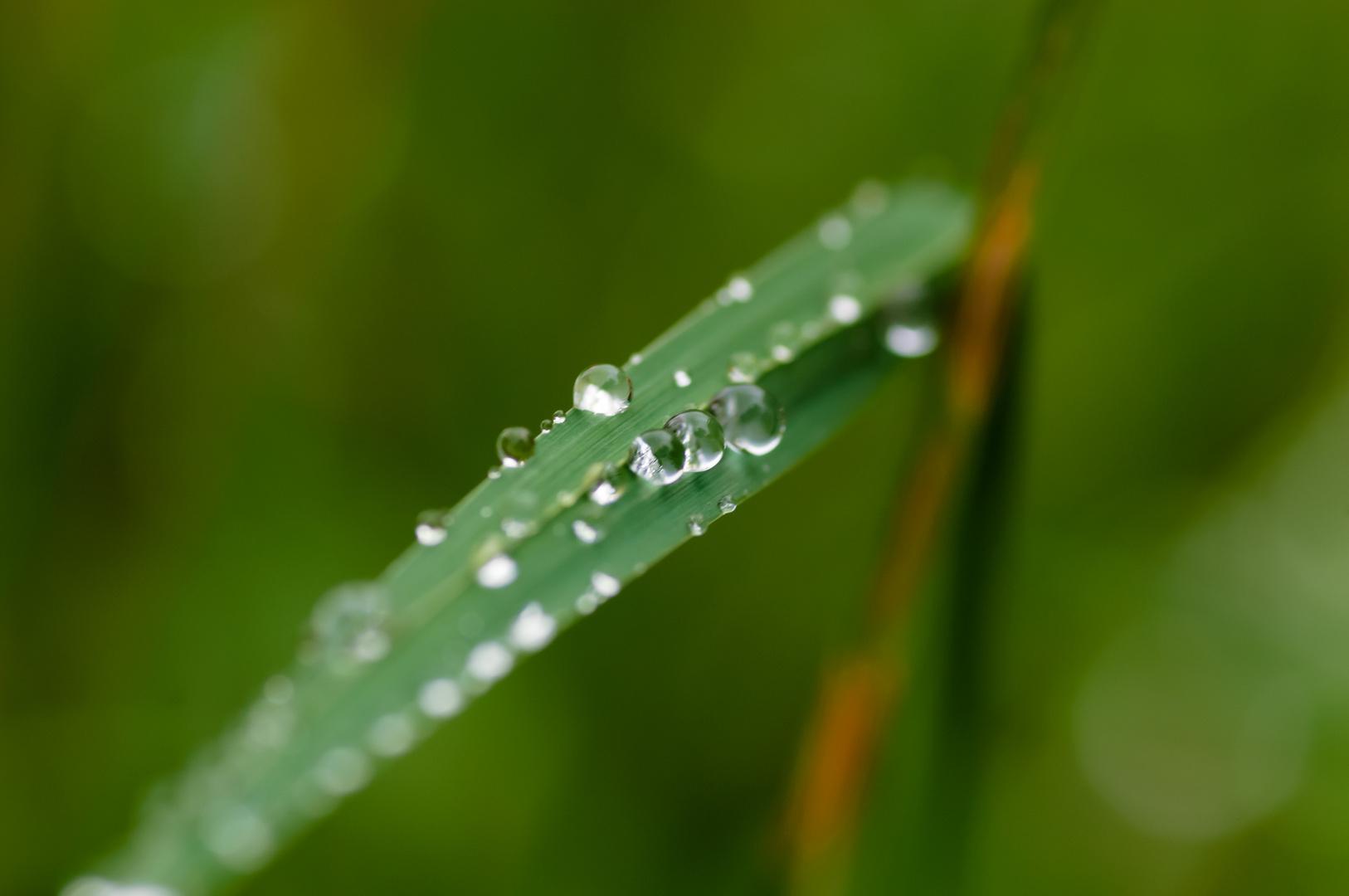 Der Regen ist vorbei ...