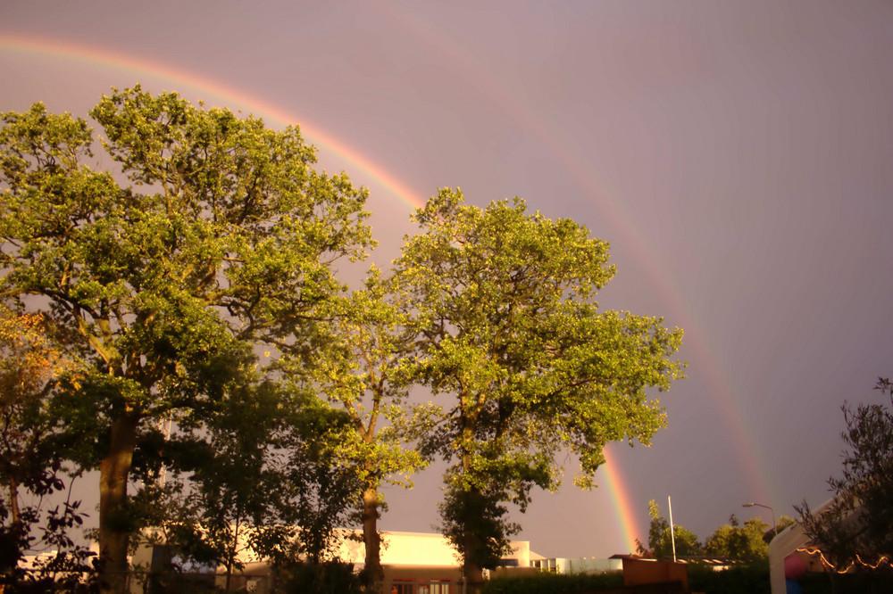 der regenboog