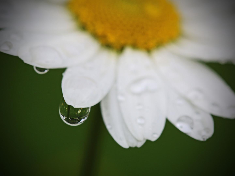 Der Regentropfen...
