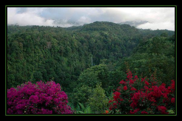 Der Regenwald...