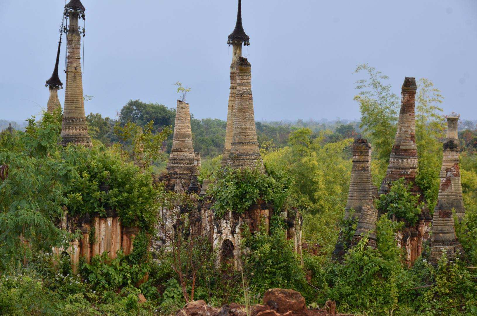 Der Regenwald erobert die alten Pagoden von Indein am Inle-See zurück, Myanmar