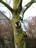 Der Rehbaum.