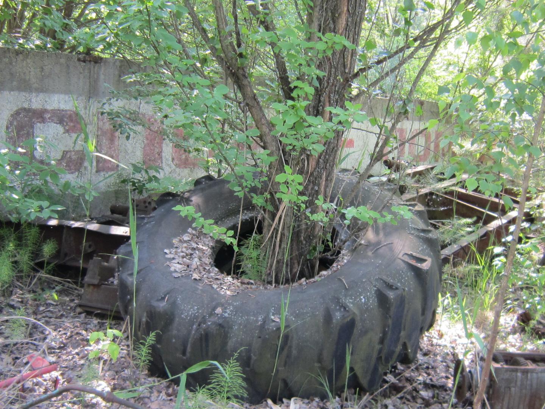 Der Reifenbaum