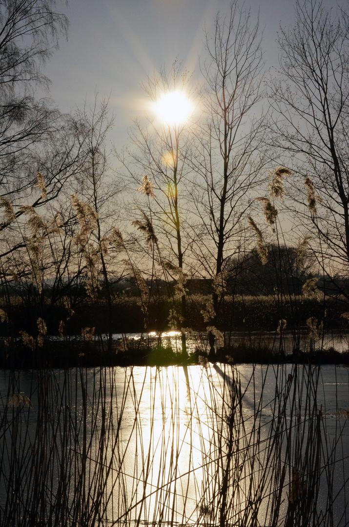 Der Reinheimer Teich im Gegenlicht