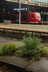 Der renaturierte Bahnhof