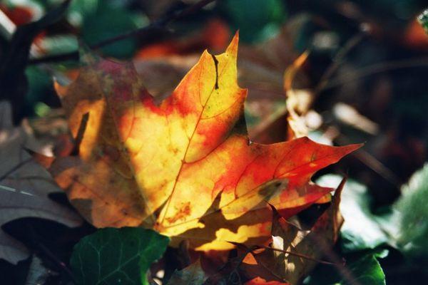 Der Rest vom Herbst