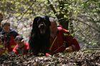 der Rettungshund findet den Weg