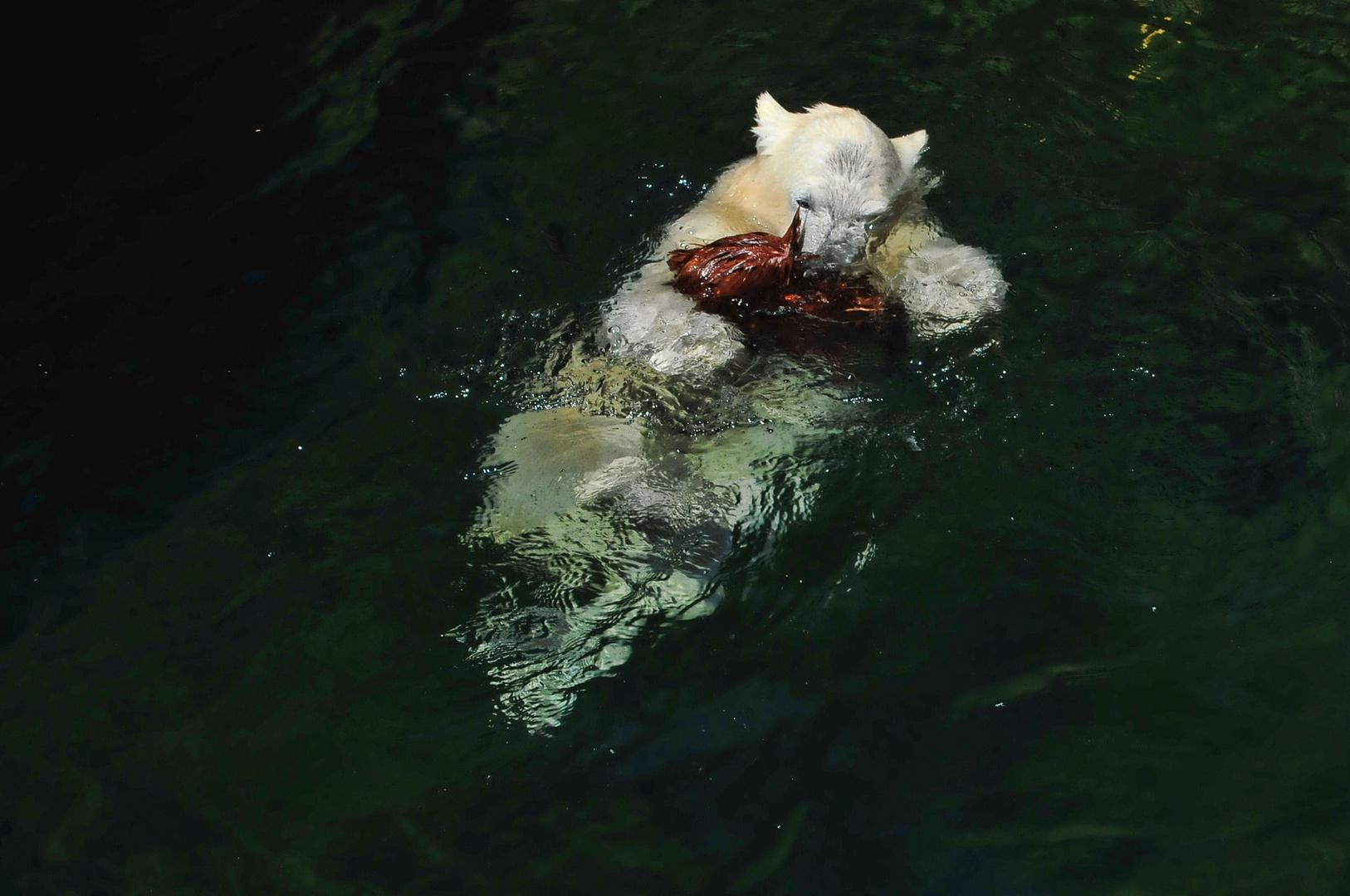 """der """"rettungsschwimmer """"... !!!"""