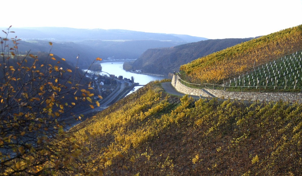 Der Rhein (erneut)