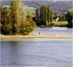 Der Rhein hat ziemlich wenig Wasser