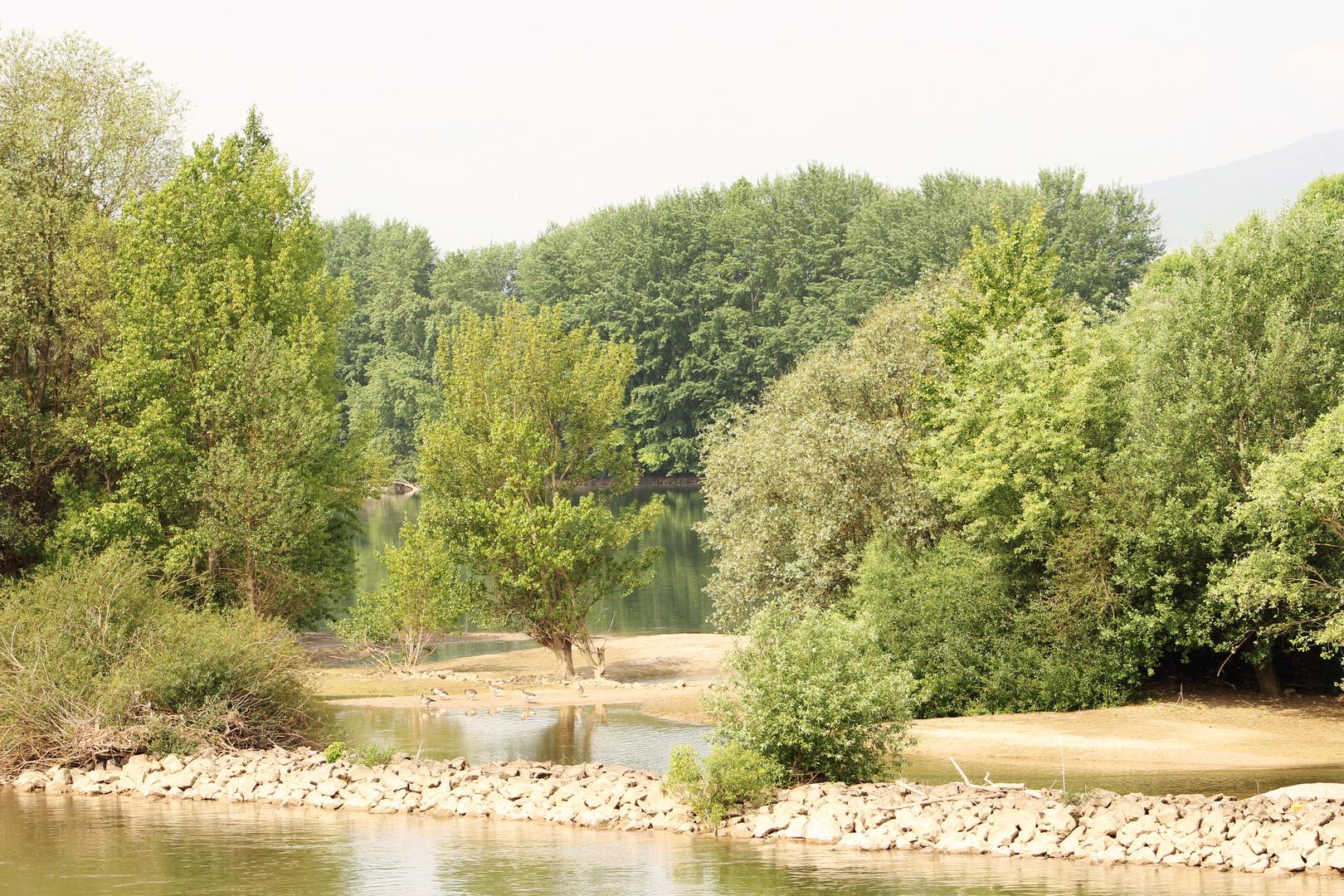 Der Rhein nicht so kanalisiert, eher renaturiert