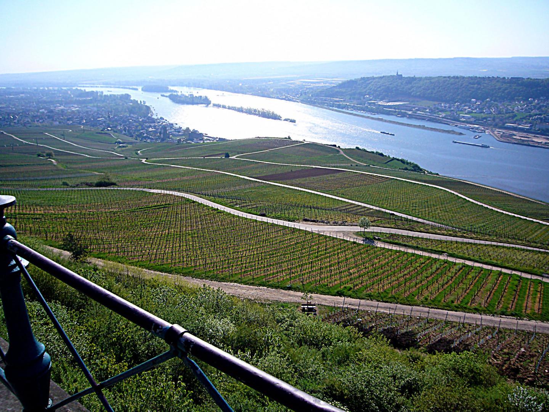 Der Rhein und Weinberg bei Rüdesheim am Rhein.