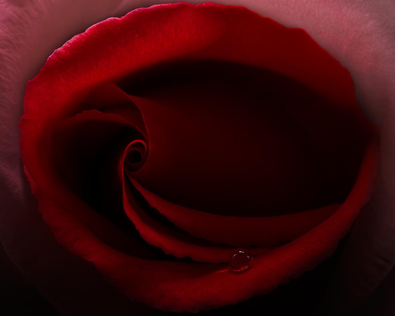 Der Rosen-Mund