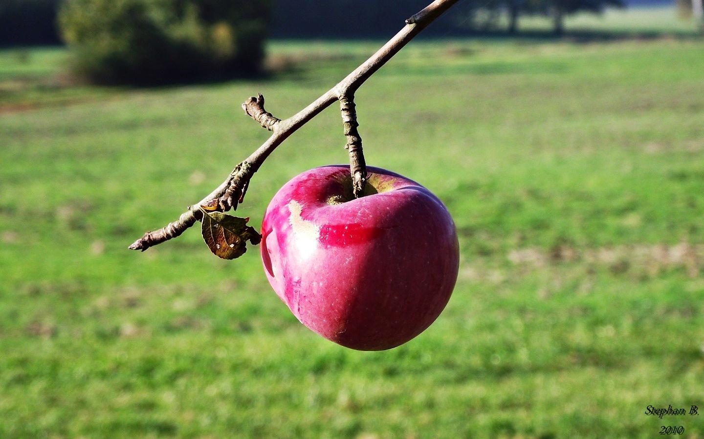 Der Rote Apfel aus Schorstedt
