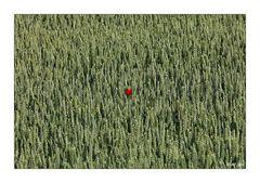 Der rote Fleck