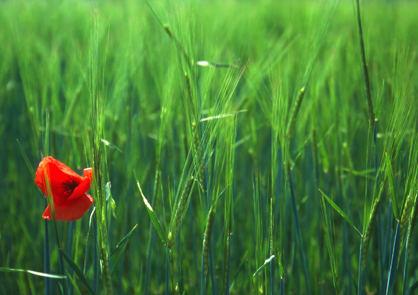 Der rote Schatz der Natur
