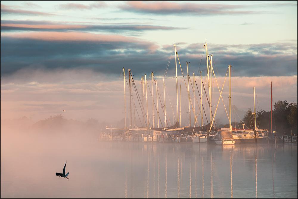 der Ryck im Nebel
