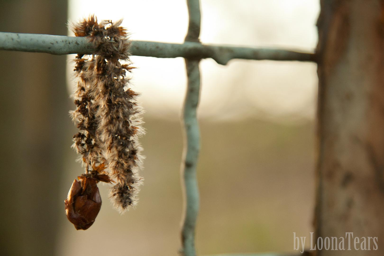 Der Samen, der nicht auf die Erde wollte...
