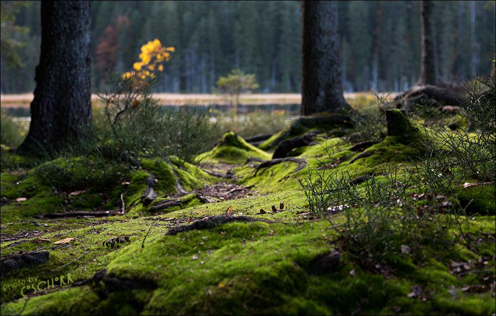 ...der Samt des Waldes...