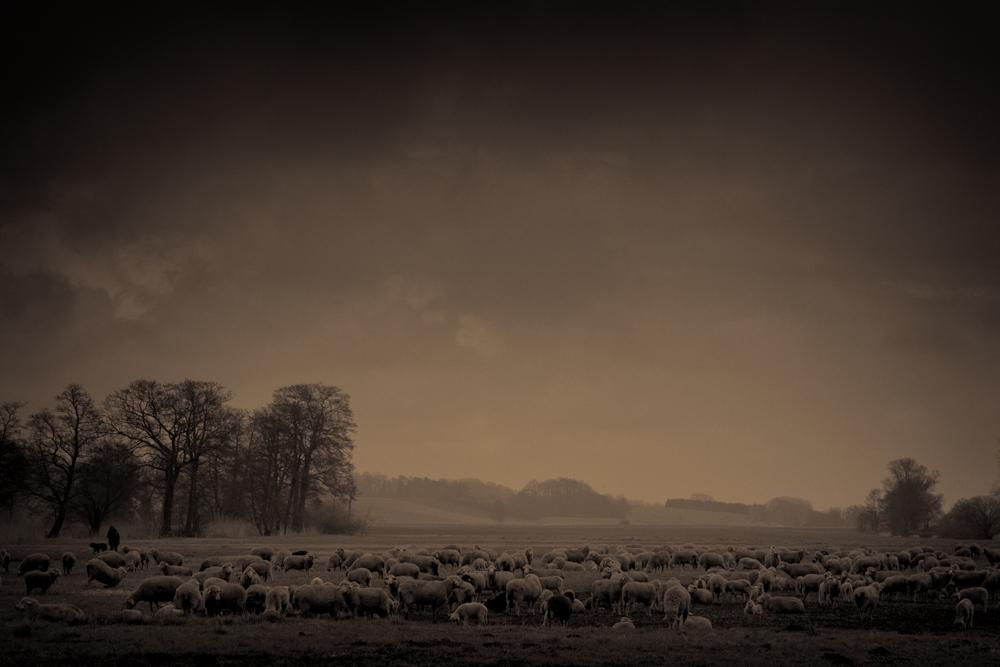 Der Schäfer und seine Schafe