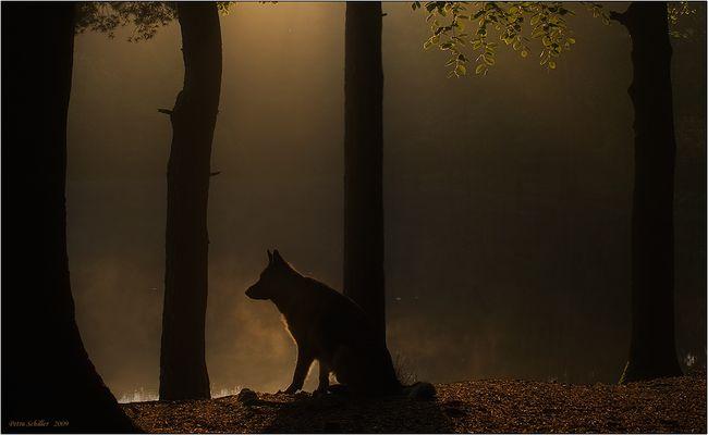 Der  Schatten.....