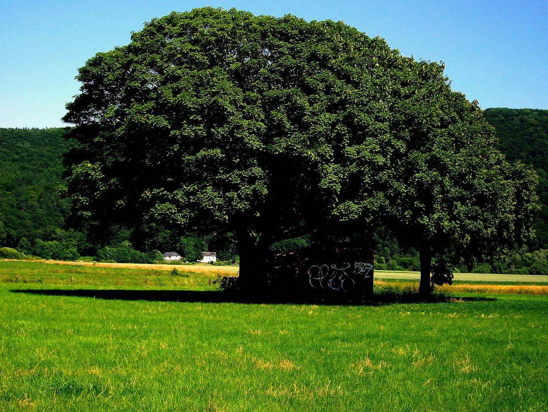 Der Schattenbaum
