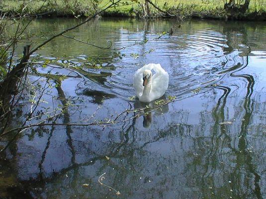 Der Schatz im Silbersee...