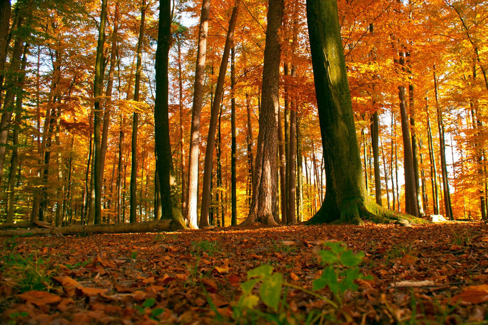 Der schimmernde Wald