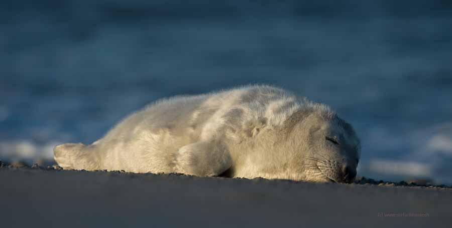 der Schlaf der Gerechten