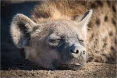 Der Schlaf der Gerechten.....