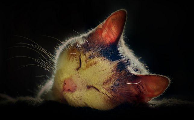 Der Schlaf der Unschuldigen
