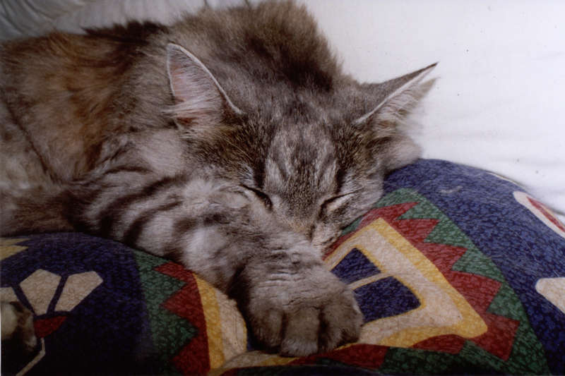 Der Schlaf des Gerechten ?