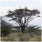 Der Schlafbaum