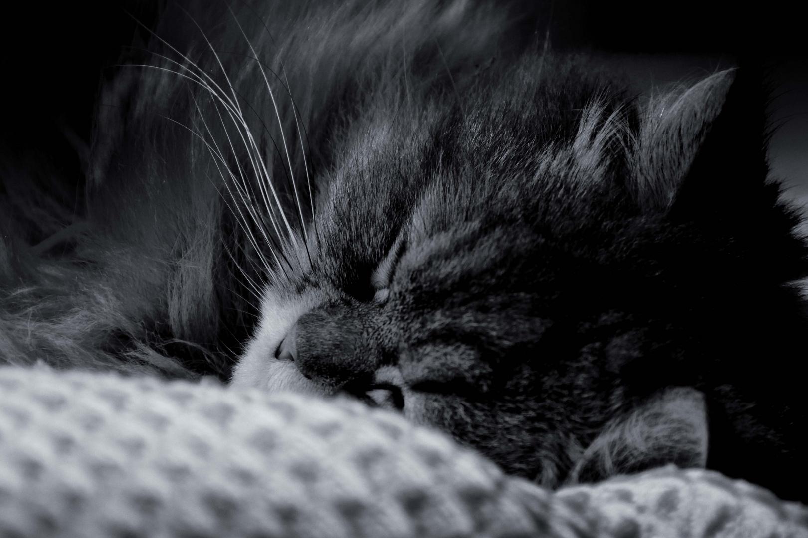 Der schlafende Butscherkönig