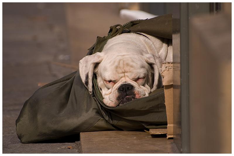 Der schlafende Wächter
