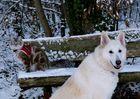 Der Schnee - einer liebt ihn, ein anderer hasst ihn!