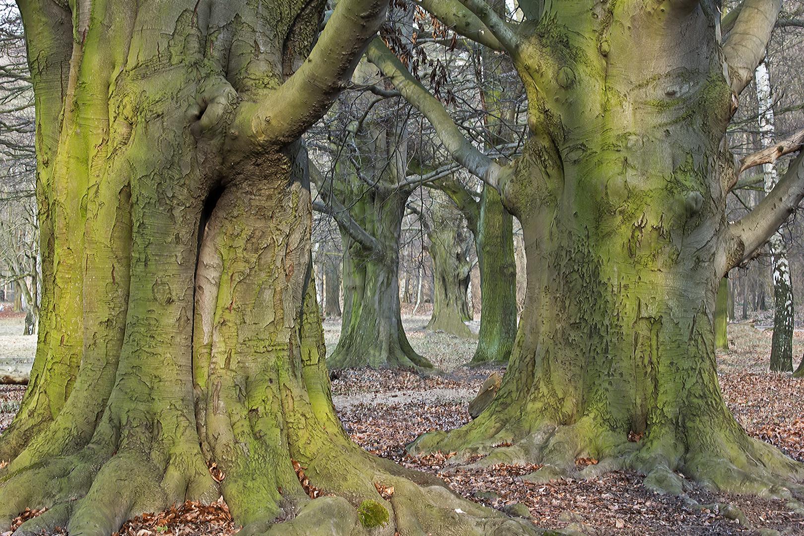 Der Schnee ist weg, die Bäume sind wieder grün...