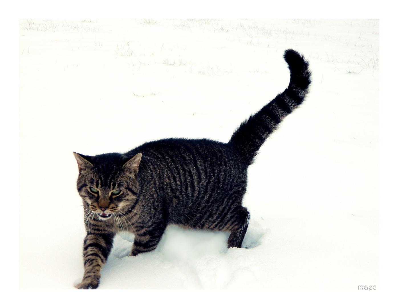 Der Schneetiger