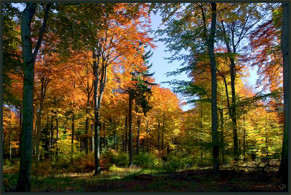 Der schöne Wald vor einigen Tagen
