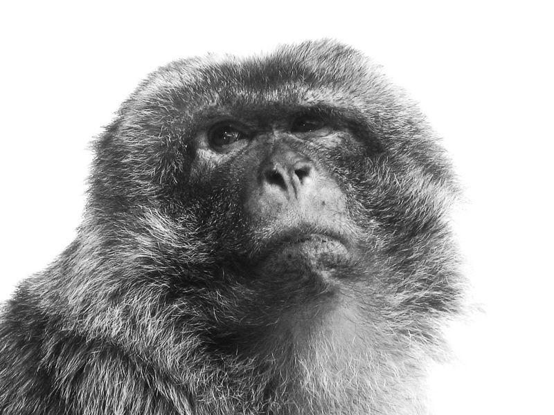 der schönste Affe in ganz Rocamadour