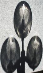 Der Schrei, Schattenlaune einer Lampe