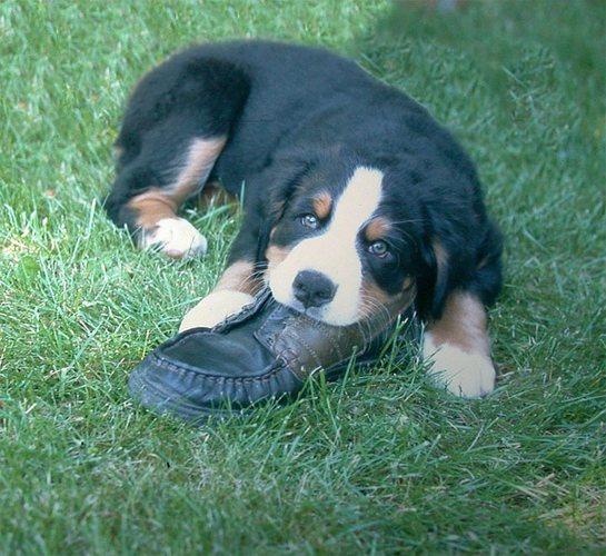 der Schuh gehört mir