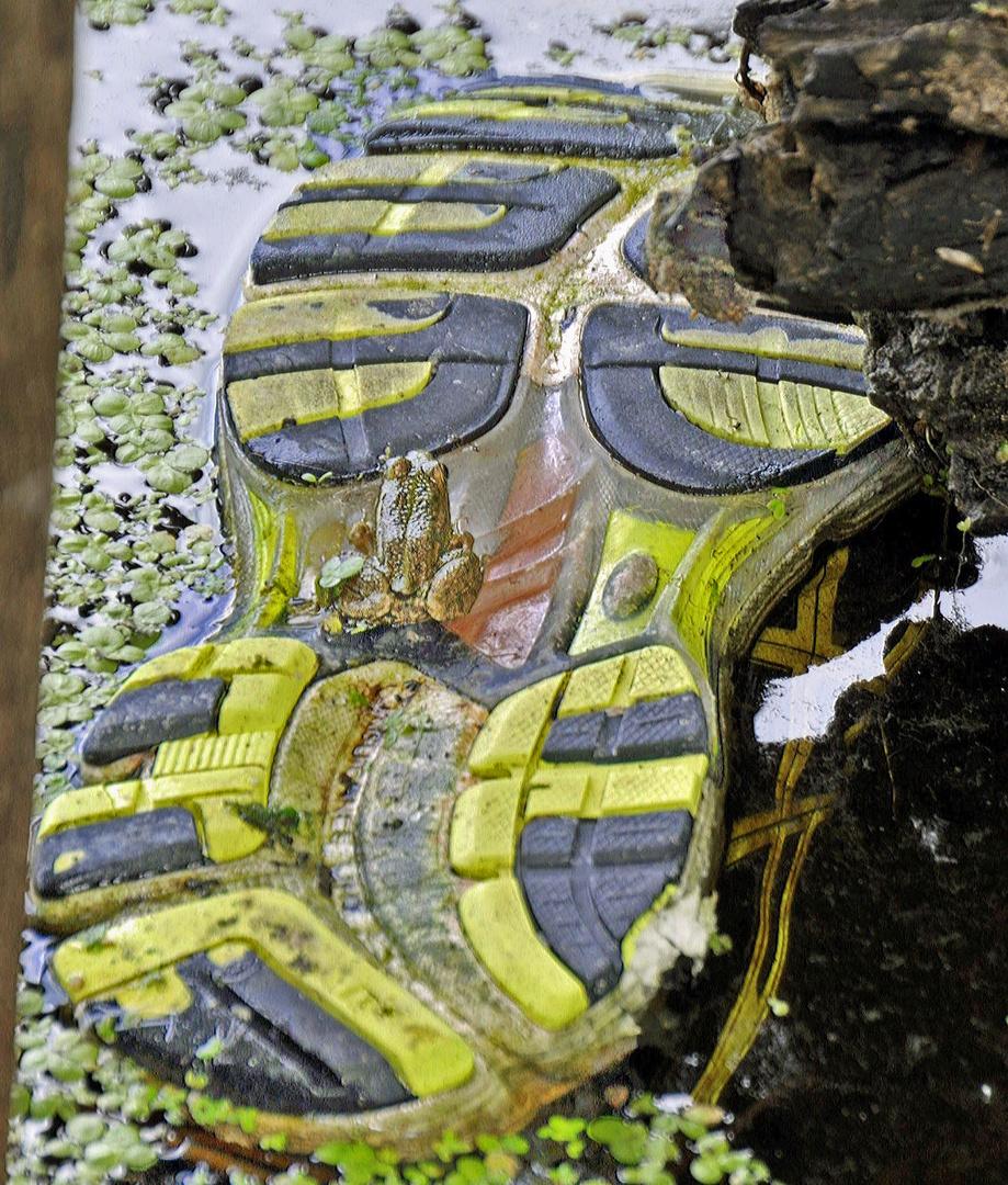 Der Schuh im Moor