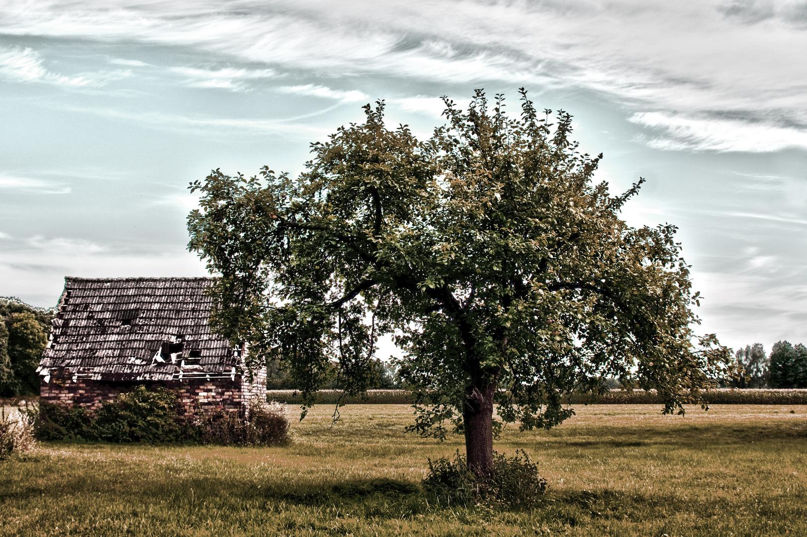 Der Schuppen neben dem alten Apfelbaum