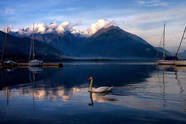 Der Schwan am Lago