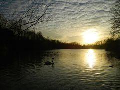 Der Schwanensee
