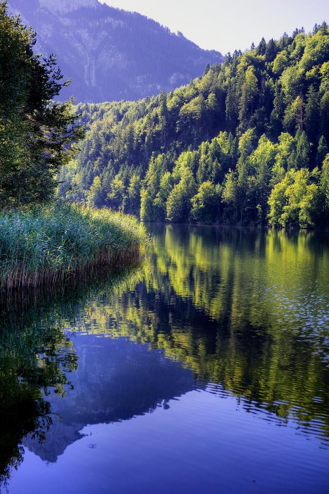 Der Schwanensee in der Nähe das Schlosses Hohenschwangau liegt versteckt im Wald
