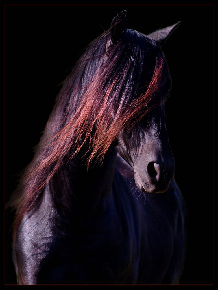 der schwarze foto bild tiere haustiere pferde esel. Black Bedroom Furniture Sets. Home Design Ideas
