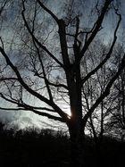 Der schwarze Baum
