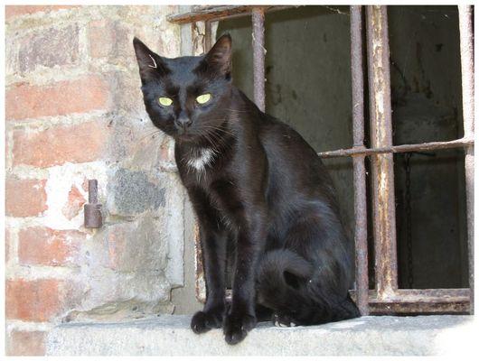 Der schwarze Kater Stanislaus.....